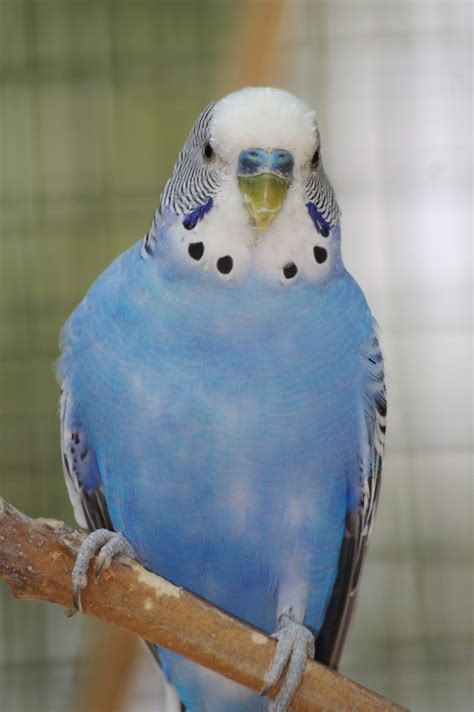 10 Tips For Caring For Your Parakeet, Dog, Cat and other
