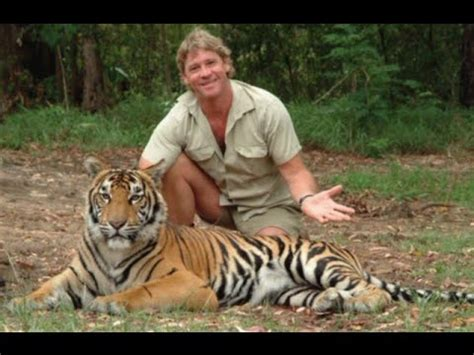 Tiger attack at famous 'Crocodile Hunter' Zoo - YouTube