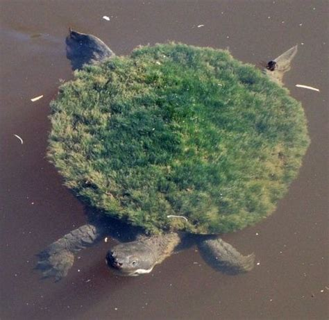 Found a baby lion-turtle in r/discworld